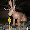 trip-2008-TX-Denton-Texas-Jack-Jackalope-2008-11-30-big (4)-640x480.jpg