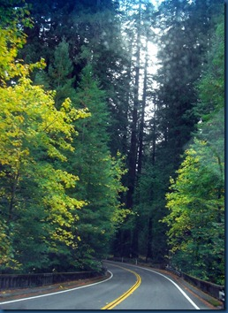 Redwoods (12)