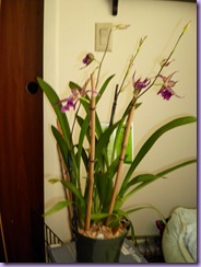 bday orchid 2