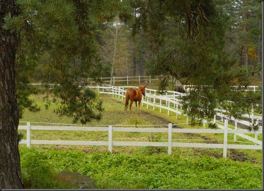 testi  nikon 50 1.8 hevosia 022