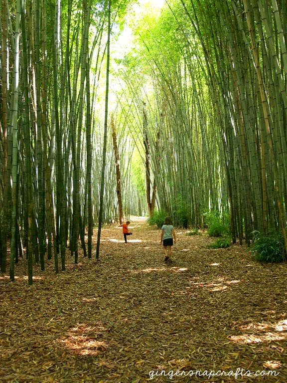 Cherokee Bamboo Forest