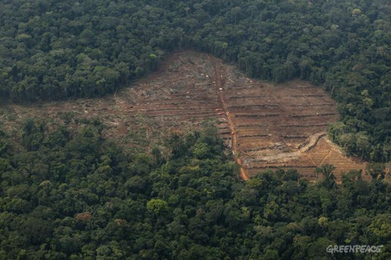Clearing of trees in a concession area of Herakles Farm's area for a palm oil plantation. Greenpeace says these clearings are illegal since Herakles' lease has not been given final approval. Herakles Farm did not respond to request for comment. © Alex Yallop / Greenpeace