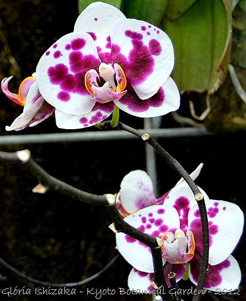 Glória Ishizaka -   Kyoto Botanical Garden 2012 - 25