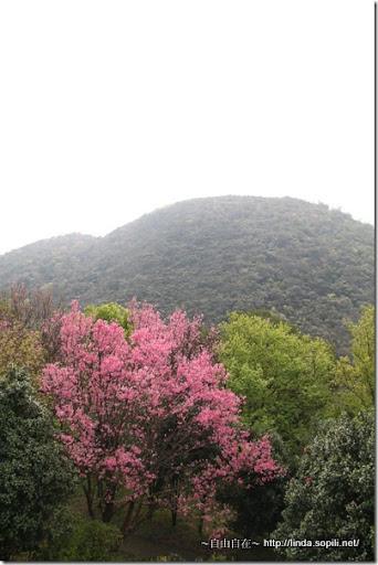 2010陽明山花季-步道