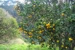 Een overvloed aan fruit