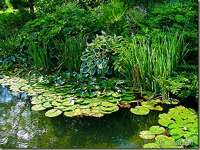 g1-Watergarden