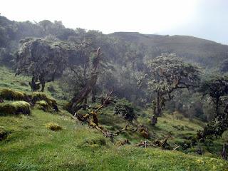 Chingaza-Sur-Organos (02).JPG