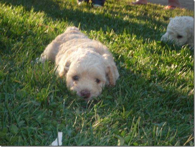 fotos de perritos imagenesifotos.blogspot (12)