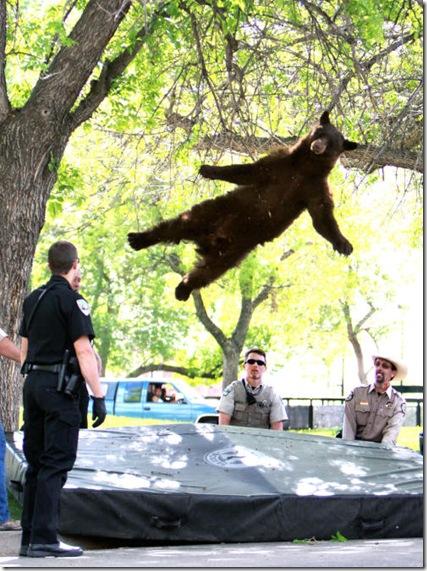 CU Bear