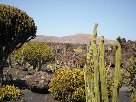 Jardin de Cactus din insula Lanzarote