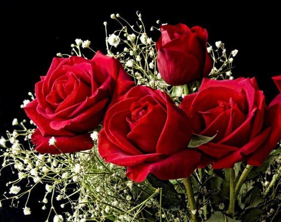 Resultado de imagem para fotos de rosas vermelhas