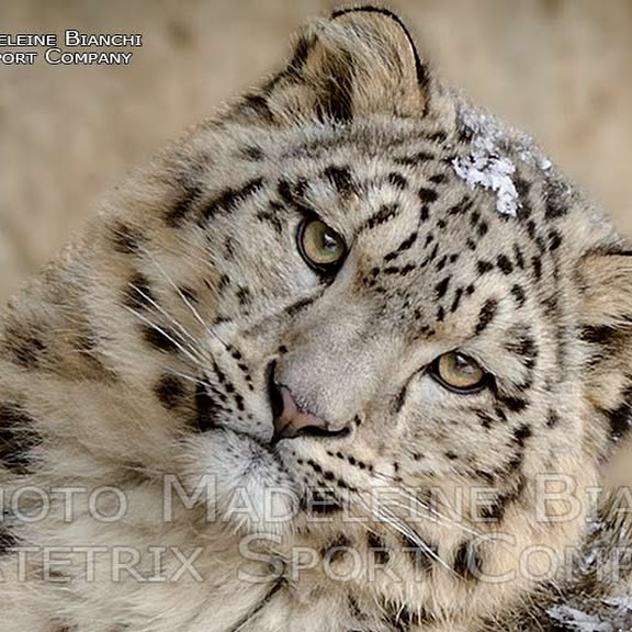 LITTLE MOHAN IN WINTER WONDERLAND