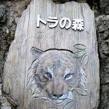 tiger at ueno zoo in Ueno, Tokyo, Japan