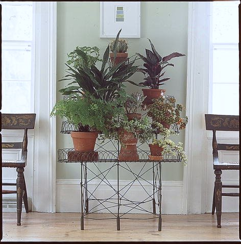 Plants and flowers inject life into one's home.