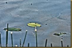 _D8C6331-Edit June 17, 2012 NIKON D800