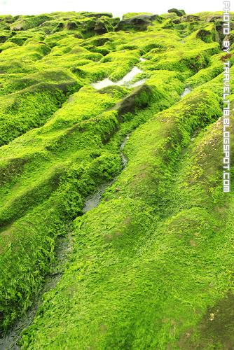 老梅綠石槽