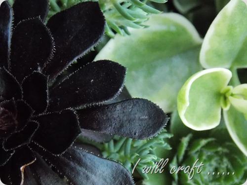Plants 024