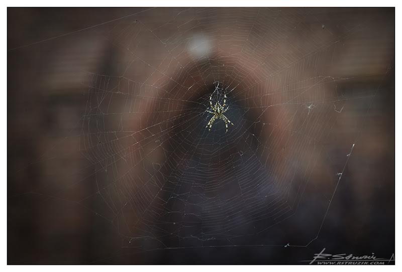 Hel. Muzeum Rybołówstwa. Miejsce na pajęczynę jak każde inne... w dodatku, mimo absolutnej bliskości, rodzaj ludzki nie niepokoił pracowitego rzemieślnika.