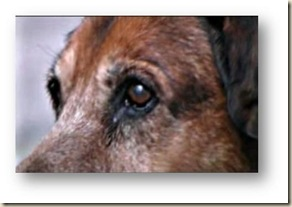 canelo perro 2 ateismo