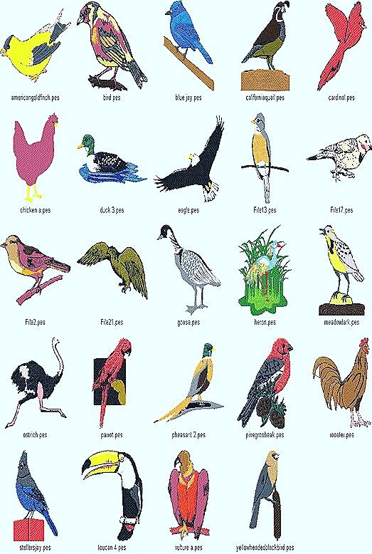birds-aves-types