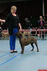 20130510-Bullmastiff-Worldcup-0583.jpg