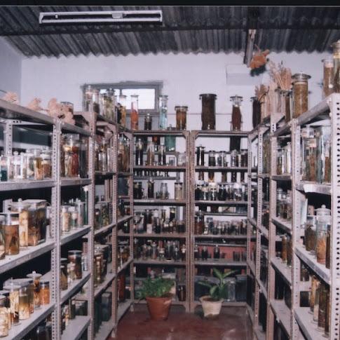 Botany-Museum.jpg