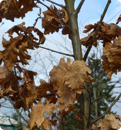 leaves hanging on