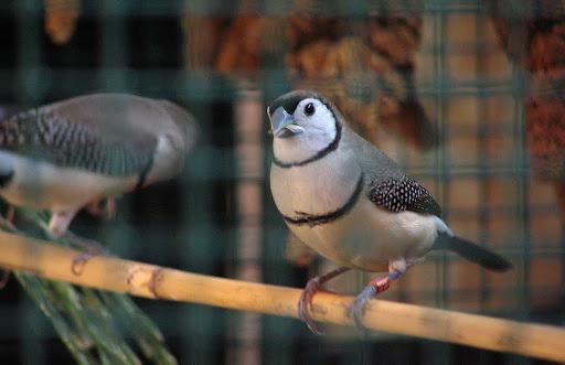 ABC sorrendben: madárnevek - képes játék IMG_4503
