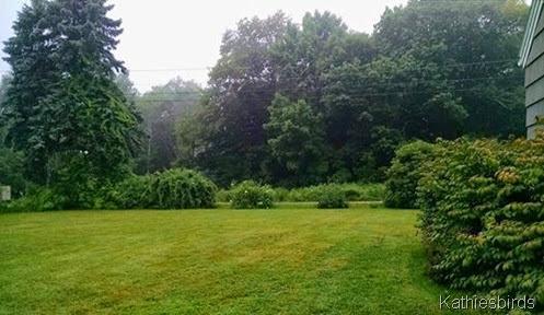 7-28-14 foggy morning