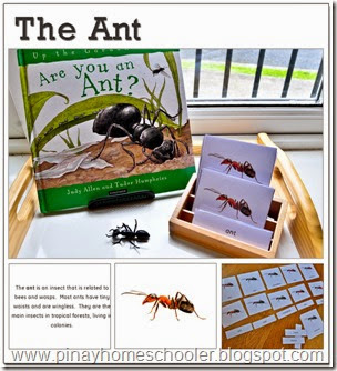 The Ant Learning Pack