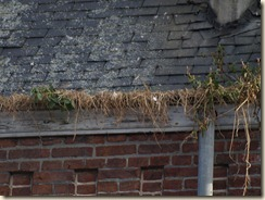 Klein-Gelmen, Klein-Gelmenstraat: de goot van de kerk is dicht begroeid
