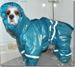 hurricane-sandy-dogs-27