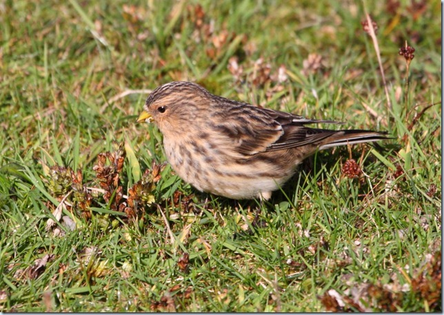 twite