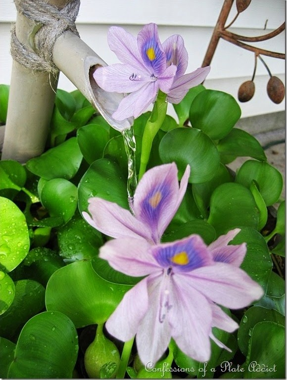 CONFESSIONS OF A PLATE ADDICT Water Hyacinths