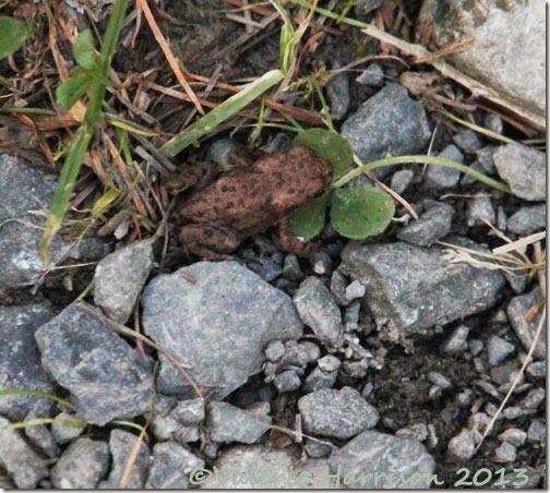 26-tiny-toad
