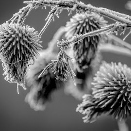 by Kevin Turner - Nature Up Close Other plants