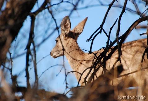 4. deer-kab