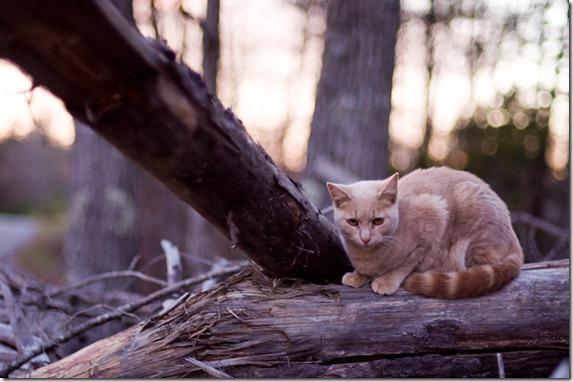 cat12-185