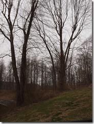 tree fun march 2013 022