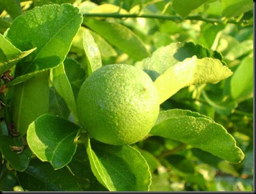 limon