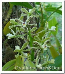 240 orquidea