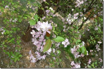 Sakura upclosed
