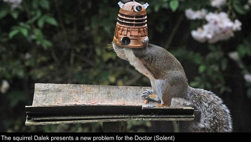 DalekSquirrel