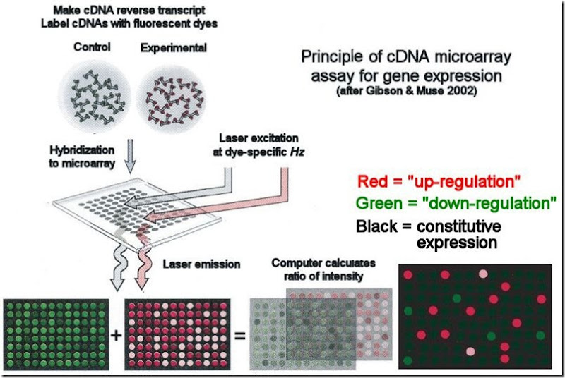 dna microarray principle