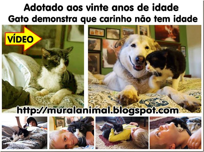 gato_adotado_20anos