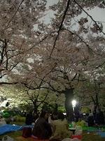 代々木公園夜桜