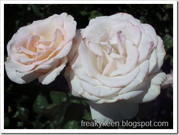 MCC Rose Garden 5