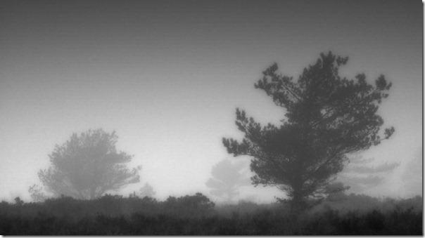 Florestas sombrias (9)