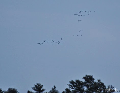 18. ducks in flight-kab