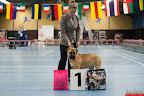 20130511-BMCN-Bullmastiff-Championship-Clubmatch-1523.jpg